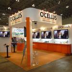 ocellus1